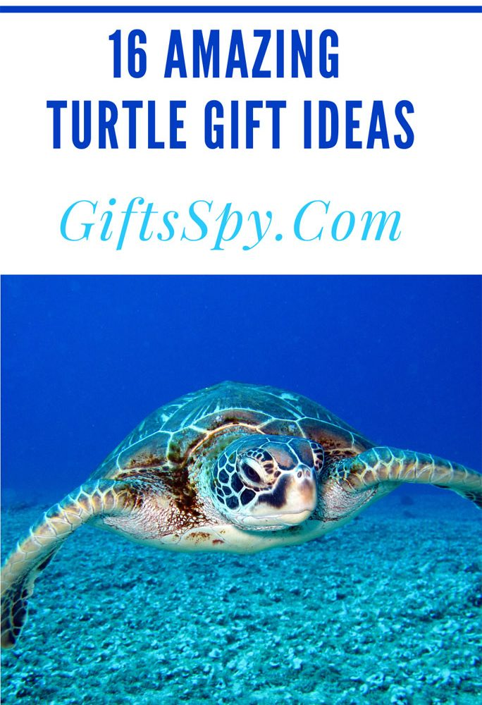 turtle-gift-ideas
